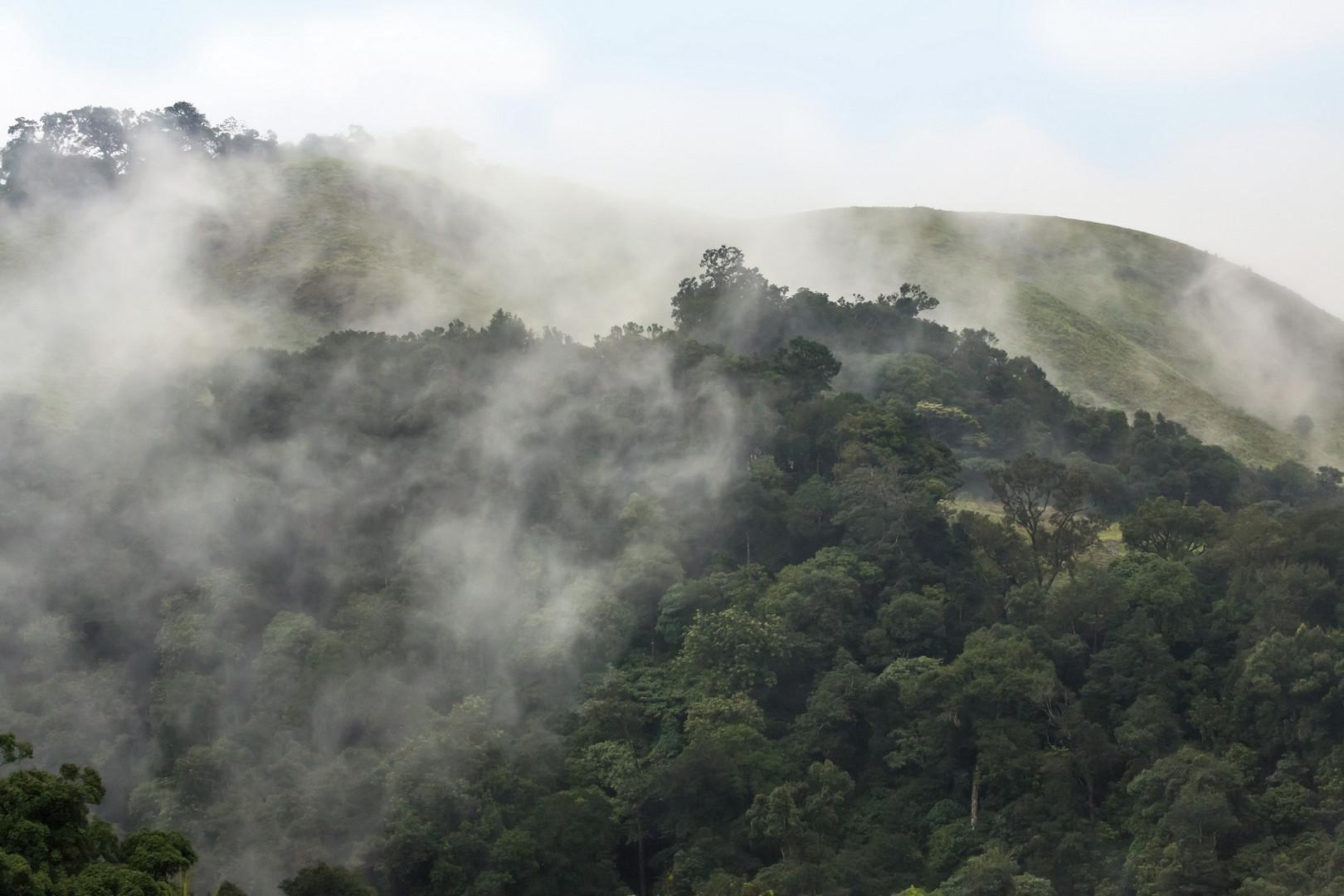 L'humidité de la jungle au petit jour - environ 50 km au sud de Kumely