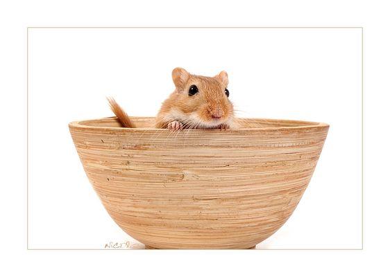 Lia Mouse