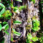 Liane Rock Wall