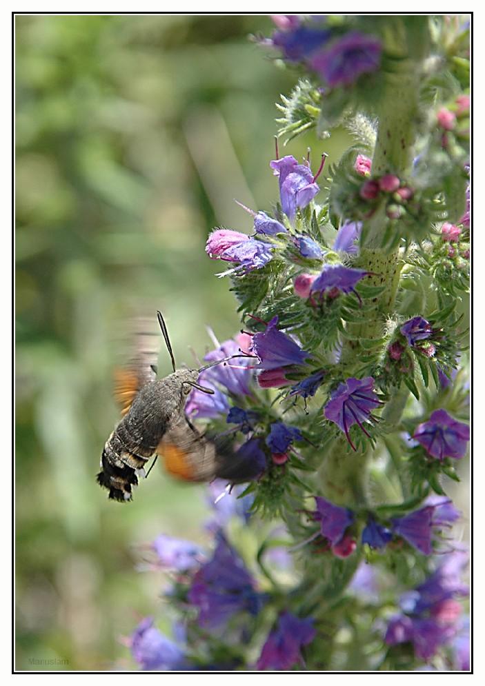 Libando nectar