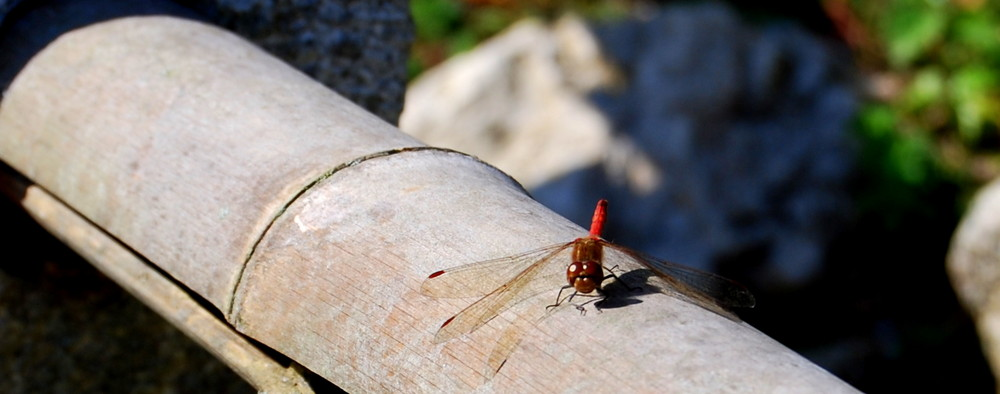 Libelle 2