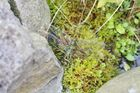 Libelle am Teich