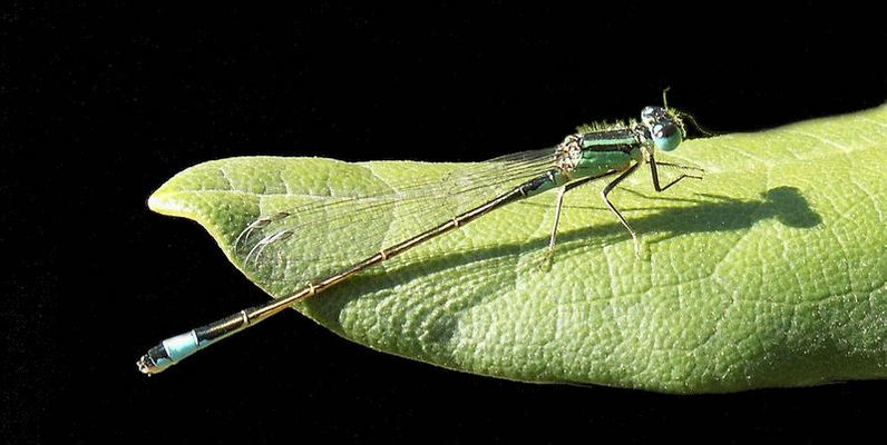 Libelle aus der Restekiste