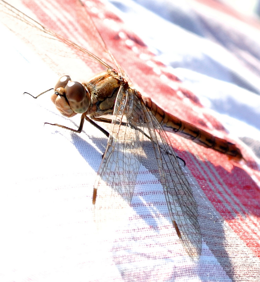Libelle beim Zwischenstopp
