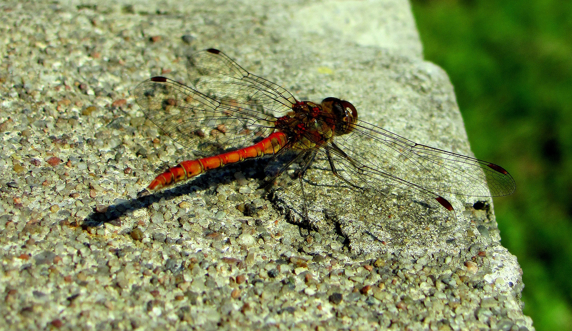 Libelle bitte bleib sitzen