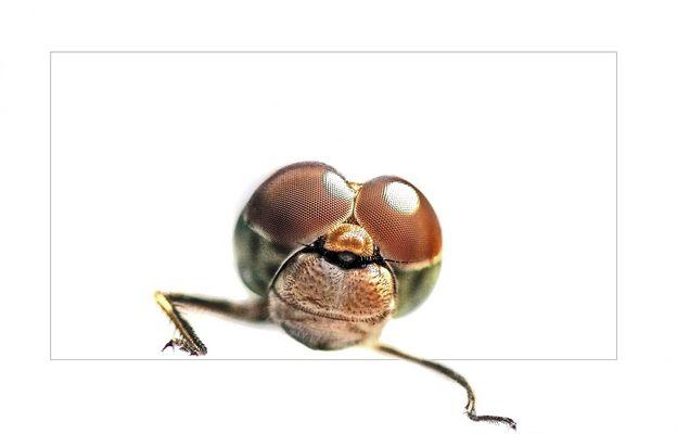 Libelle in 3D