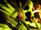 Libelle nach dem schlüpfen