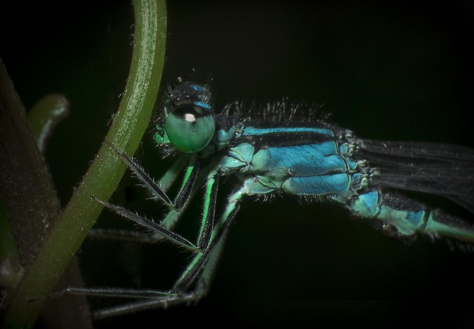 Libelle v2