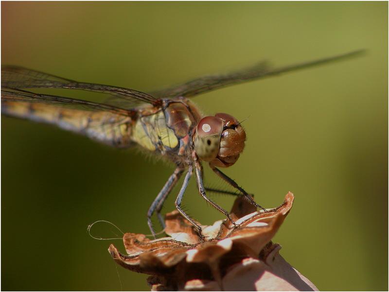 Libelle zu Besuch bei Frau Spinne ... Dachparkplatz)))