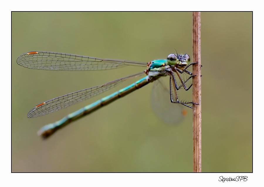 Libelle...einfach nur festhalten :-)