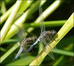 Libellen Action