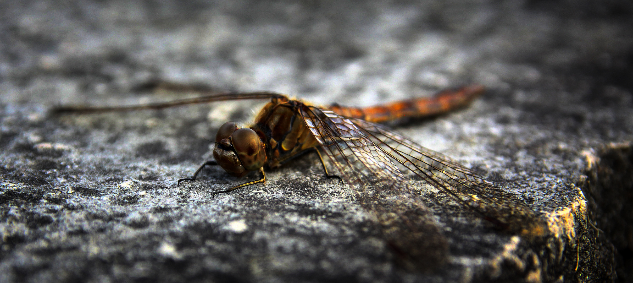 Libellen-Chillen
