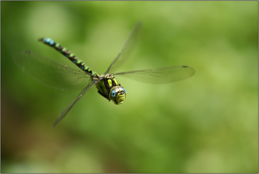 Libellen können wirklich sehr neugierig sein...