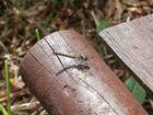 Libellen - Ruhepause
