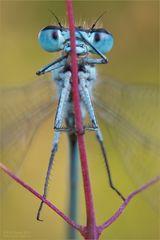 Libellen-Turnstunde