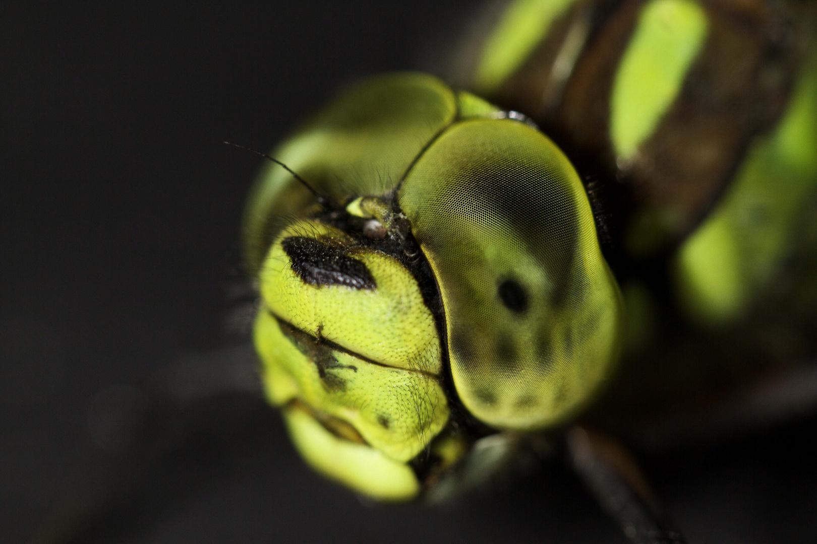 Libellenaugen
