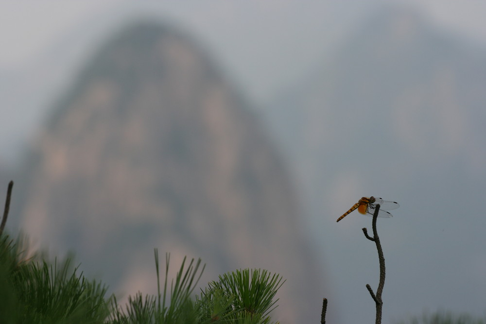 libellule en Chine 2