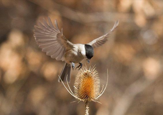 Libertà di volare