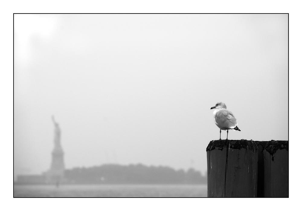 Liberty Island 1