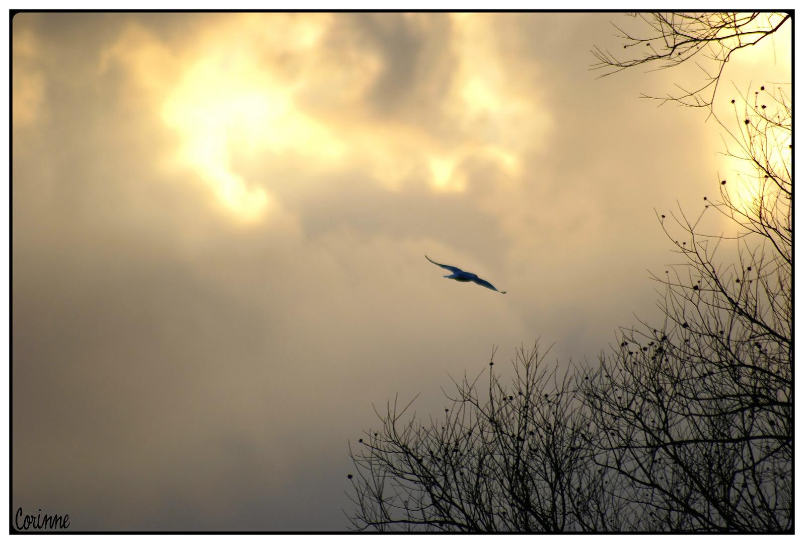 Libre comme l'oiseau