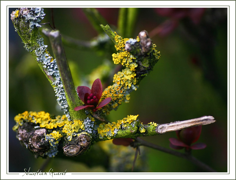 lichens et mousse