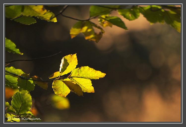 Licht... (01551)