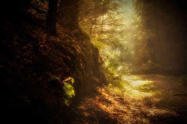 licht am ende des weges