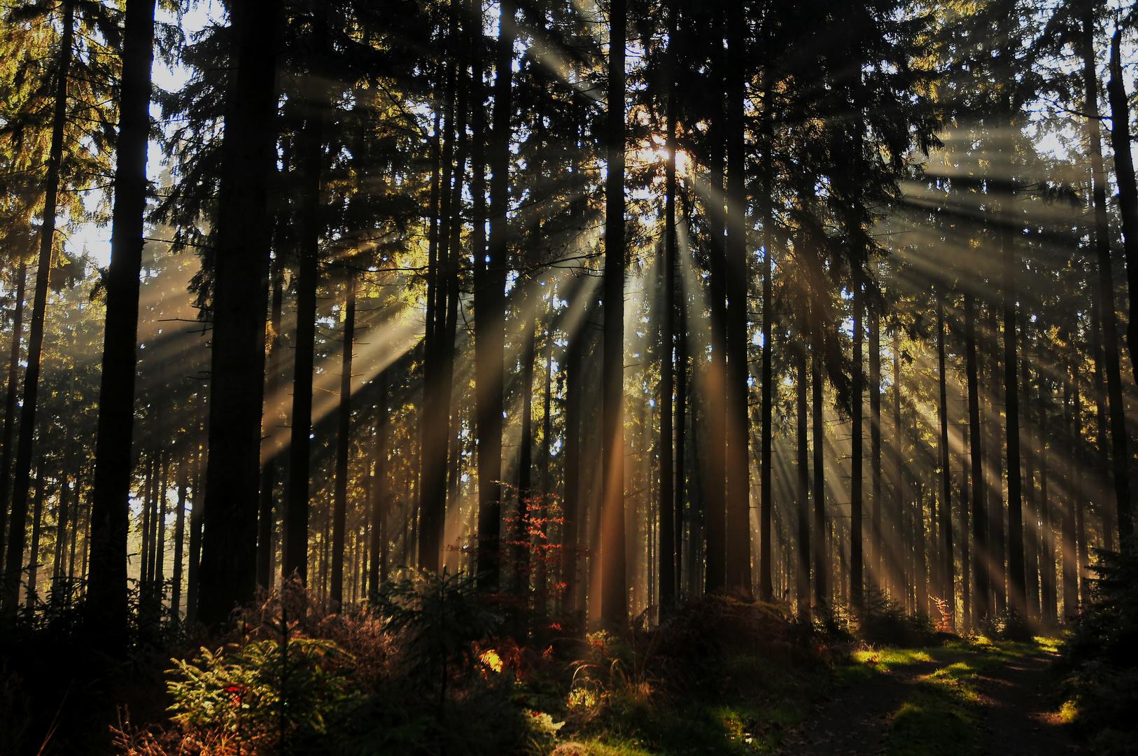 Licht des Waldes