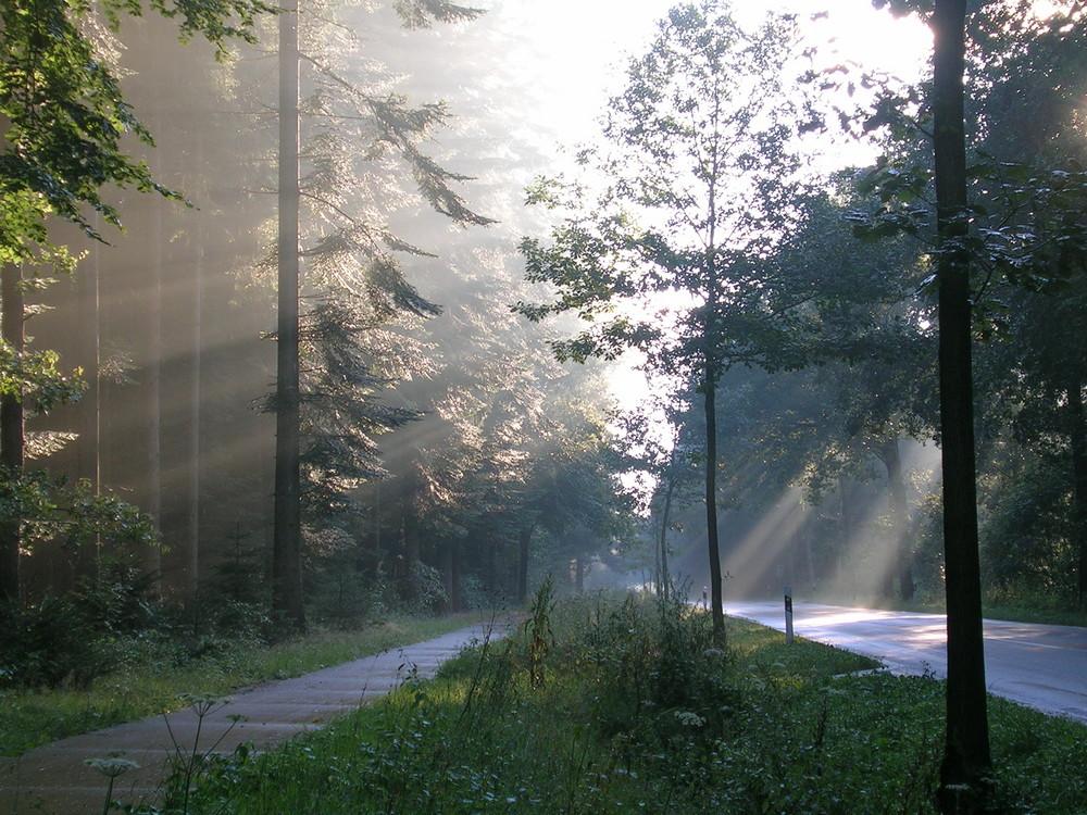 Licht durchbricht die Wälder