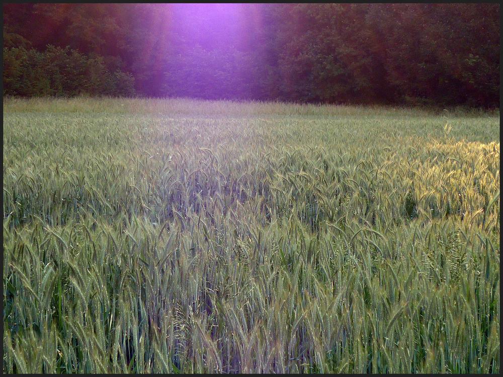 Licht im Feld