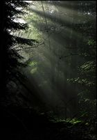 Licht im finsteren Tann