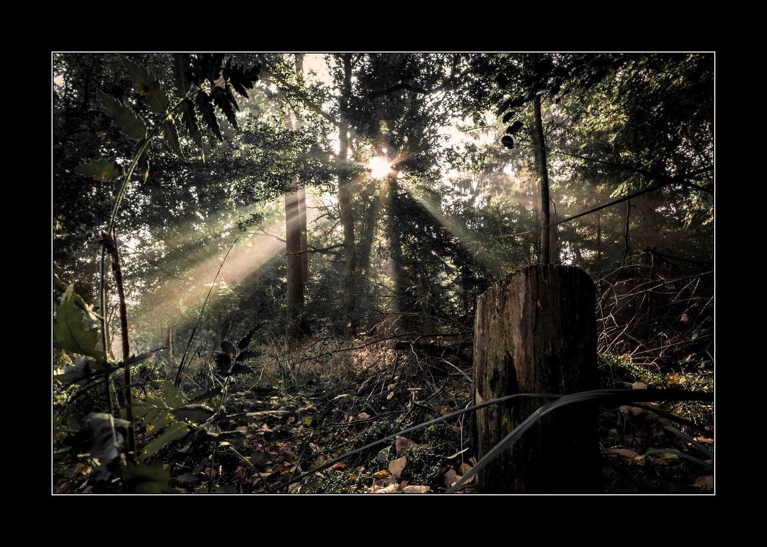 Licht im Morgennebel