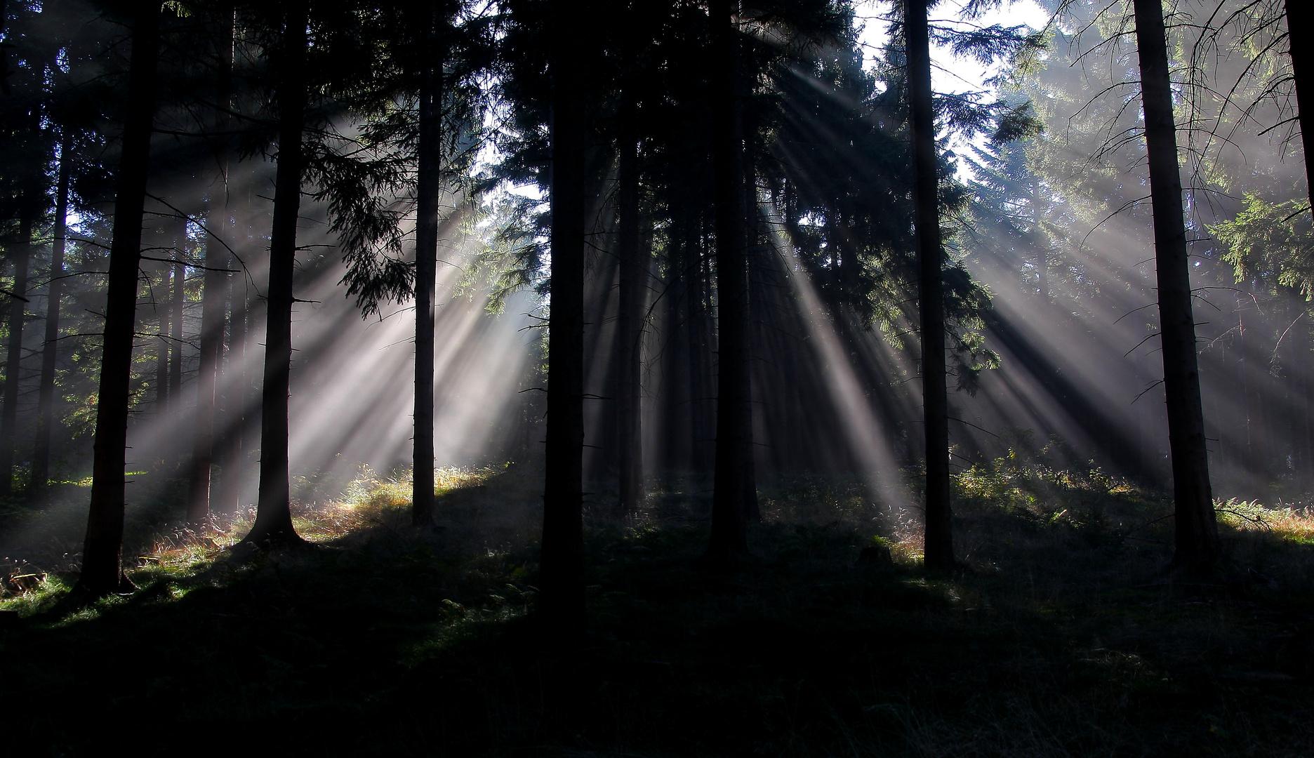 Licht im Wald 2