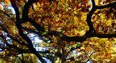 ....Licht in den Zweigen... by SINA