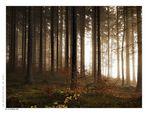 Licht in Waldes dunkel....