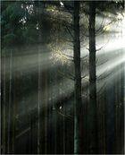 Licht ins Dunkle gebracht