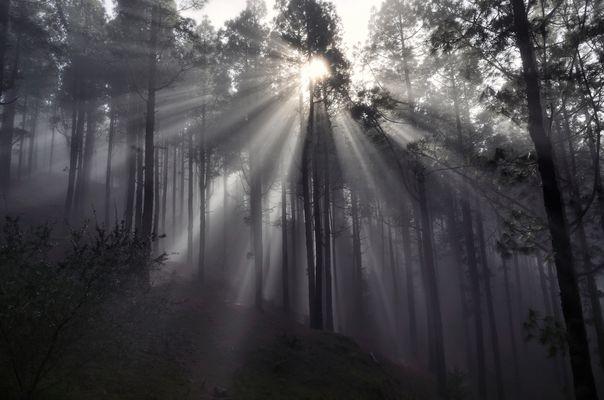 Licht Nebel und Wald