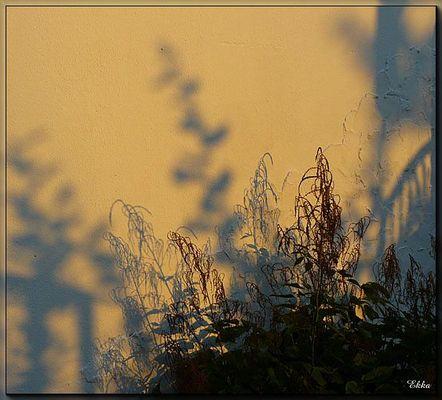 Licht - Schatten