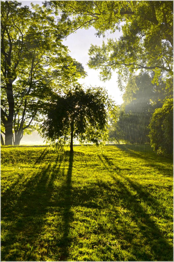 Licht - Schatten & Regen