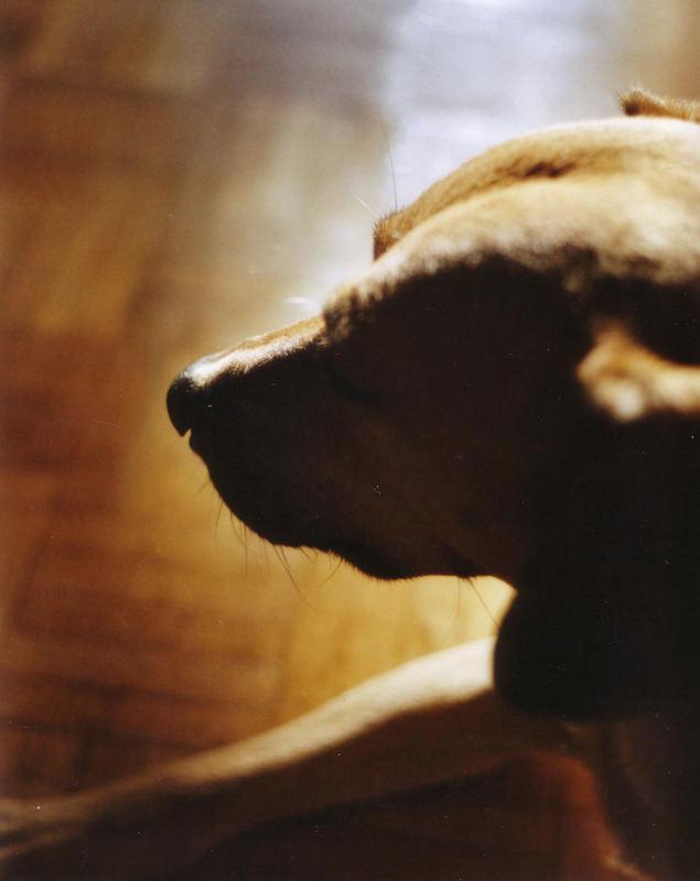 Licht, Schatten und dazwischen Hund