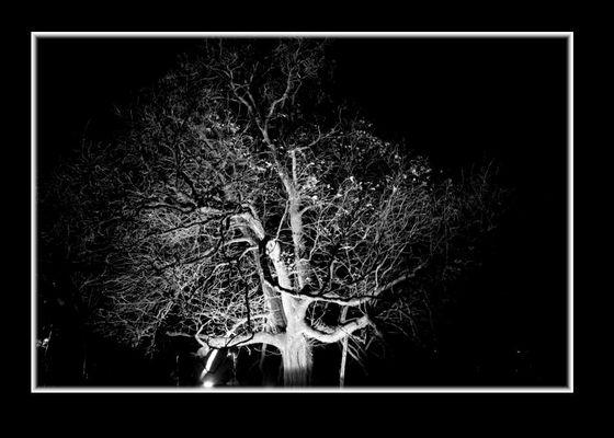Licht und Baum