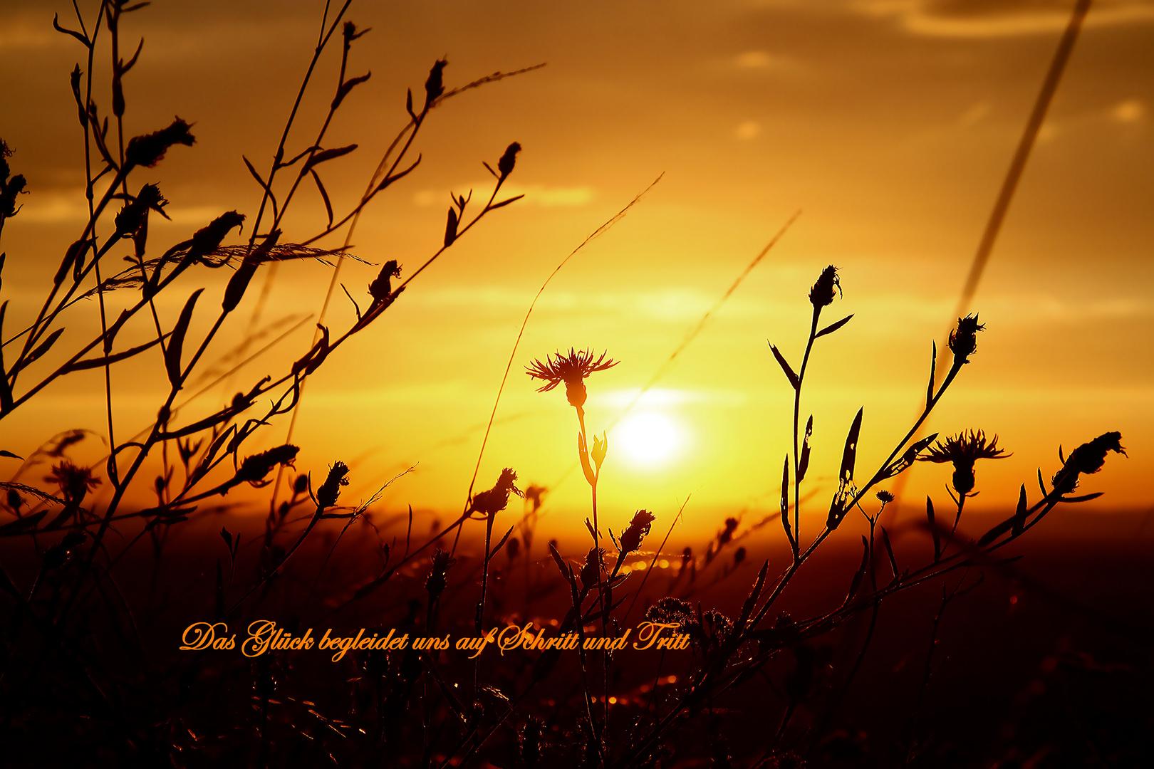 Licht und Lebensenergie....