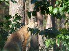 Licht und Luchs im Wildpark