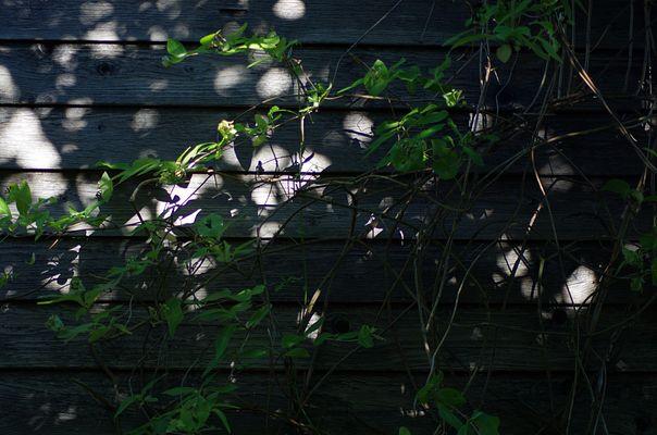 Licht und Schatten 11