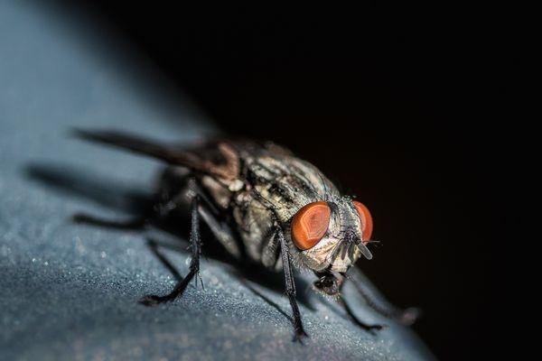 Licht und Schatten - die Fliege