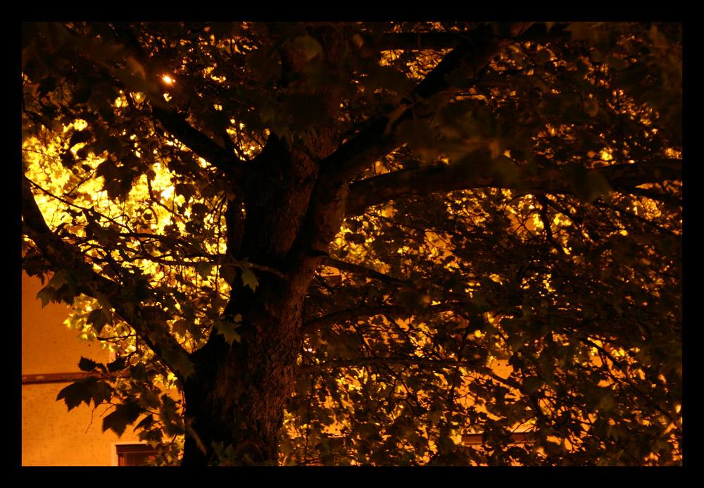 Licht und Schatten --- Du stehst --- unbeirrt
