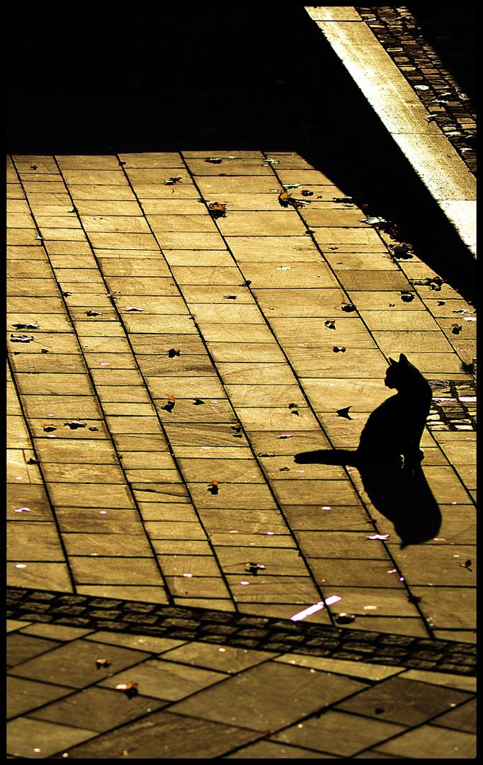 Licht und Schatten einer Katze