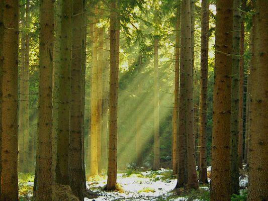 licht und schatten im wald