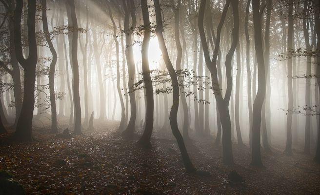 Licht und Schatten im Wald genießen...