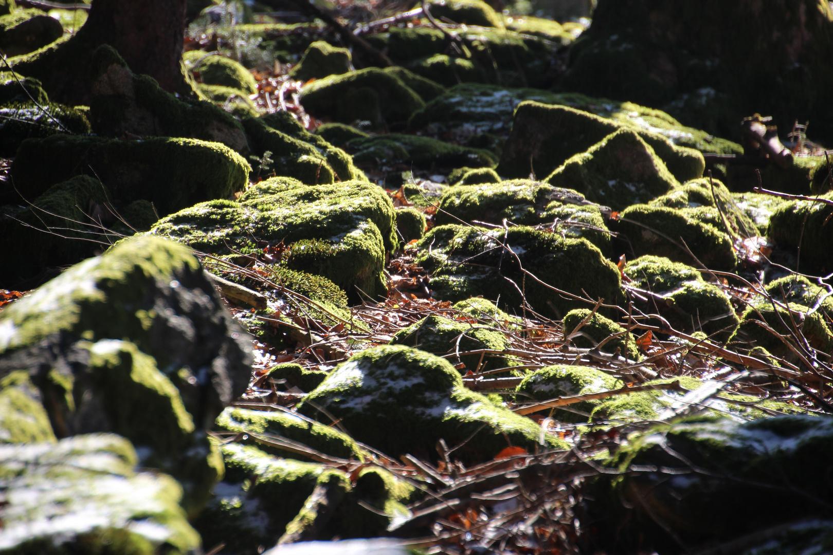 Licht und Schatten von bemoosten Steinen